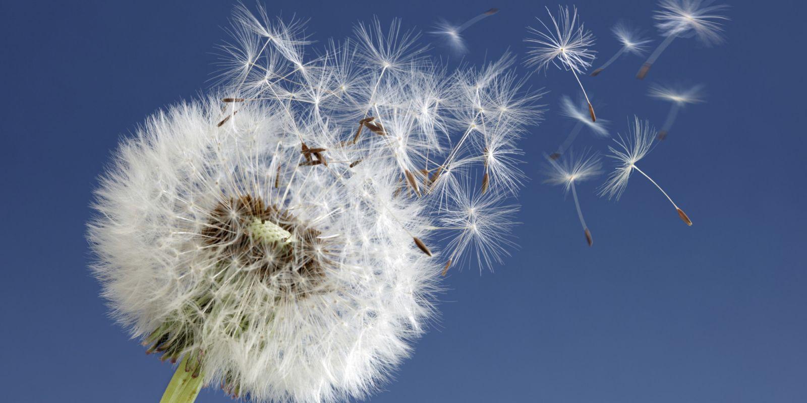 Resultado de imagen de polen