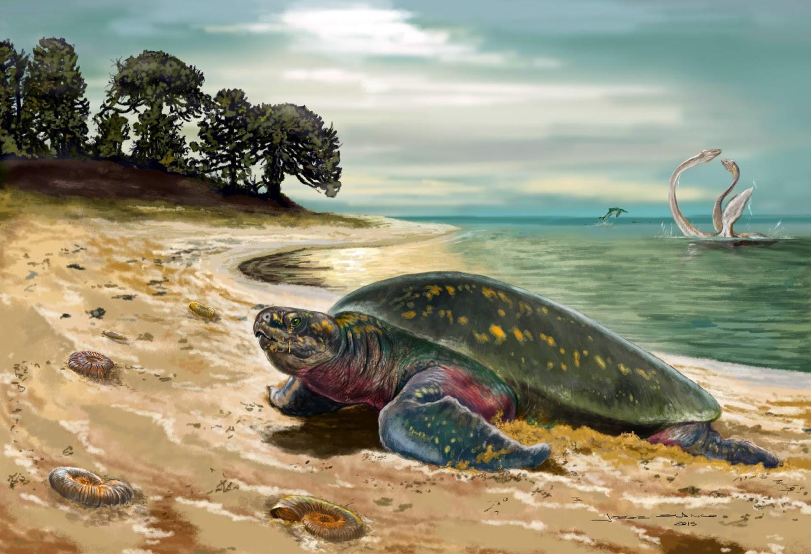 Nueva especie de tortuga marina del Cretácico inferior de Colombia ...